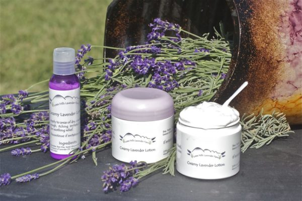 Creamy Lavender Lotion