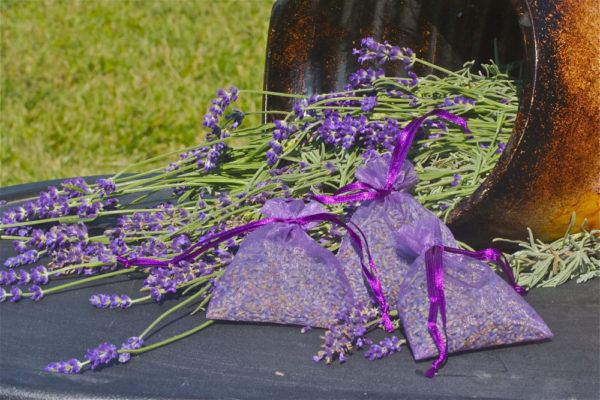 Dried Lavender Buds in Sachet
