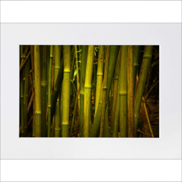 Bamboo matted print