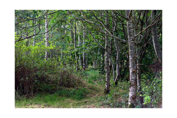 Trees & Wood in Wales – 16″ x 20″ canvas