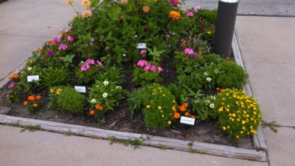13″ BioMarkers Plant Label Garden Stake Tags- Angled Top