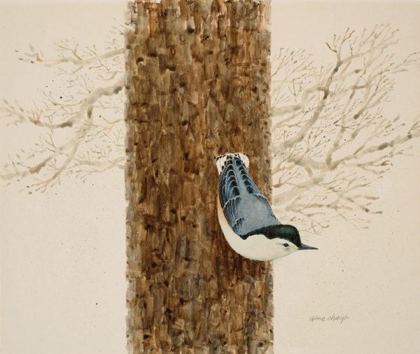 """The Nuthatch Walk"" Giclee Art Print"