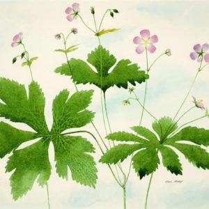 """Wild Geraniums"" Giclee Art Print"