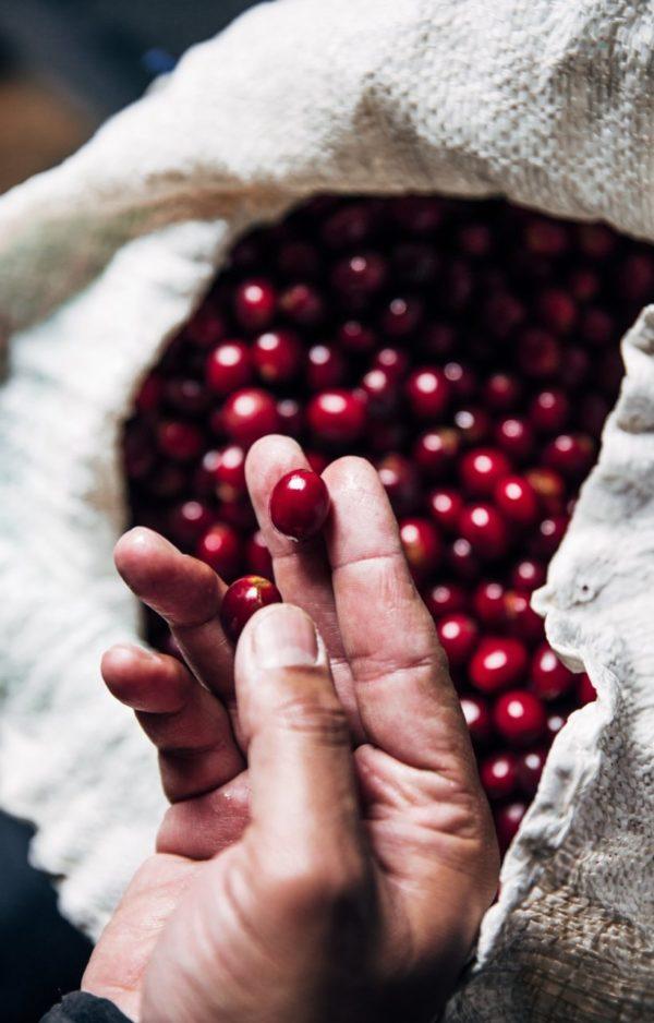 Asian Plateau Blend –  Fair Trade Organic