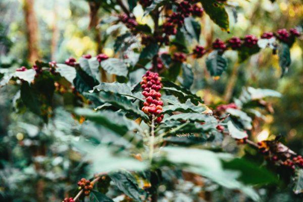 Fireside Holiday Blend – Fair Trade Organic