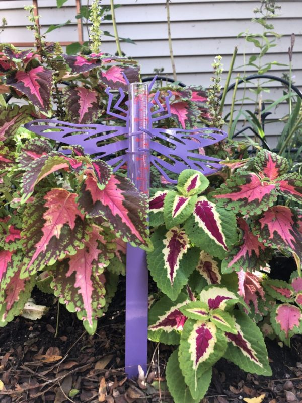 Dragonfly Rain Gauge