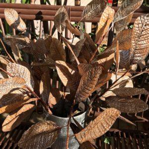 Silver Edged Leaf Picks
