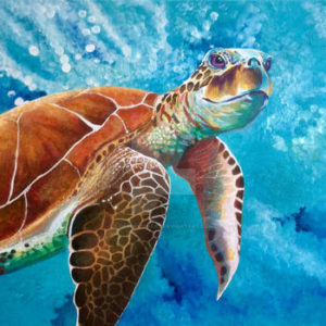 Turtle Art Print from DKW Art Gallery