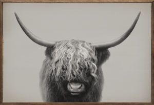 Highland Bull – Kendrick Home Wood Sign