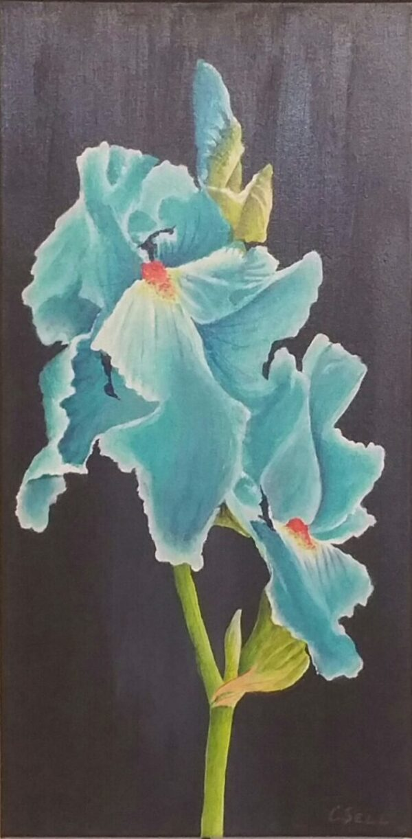 Aqua Blue Iris Acrylic Painting by Cris Sell