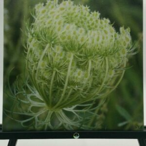 Floral Detail Canvas by Sue Moss