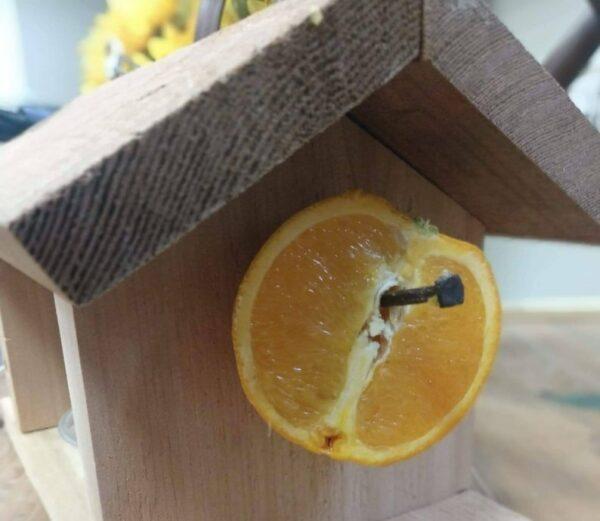 Cedarwood Oriole Bird Feeder